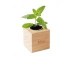 Puidust taimepott mündi seemnetega